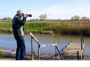 Birding at Erie Marsh Preserve