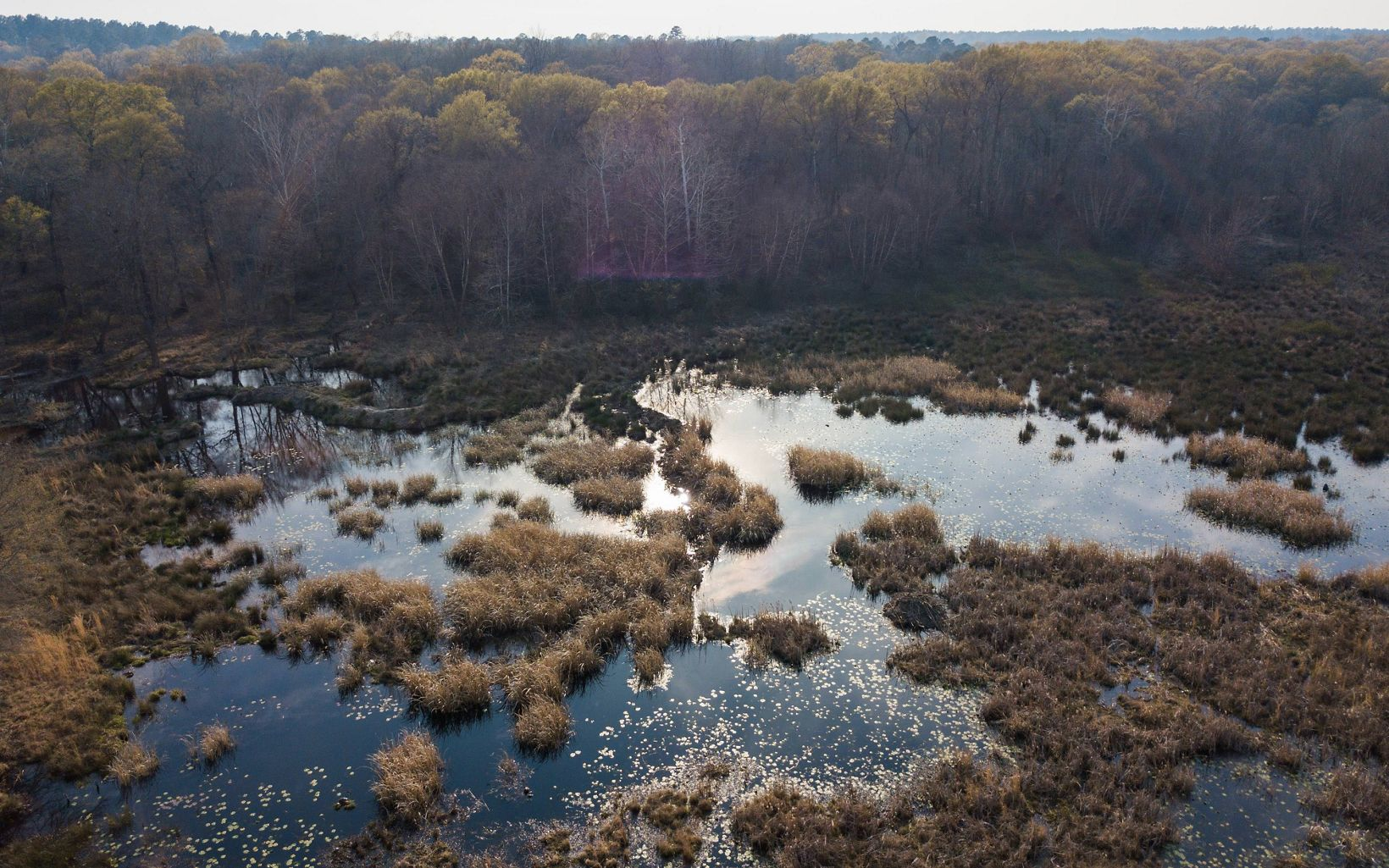 Beavers dams help maintain the preserve's wetlands..