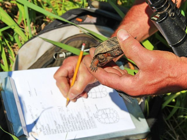 One hand holds a small turtle while the other writes down information.