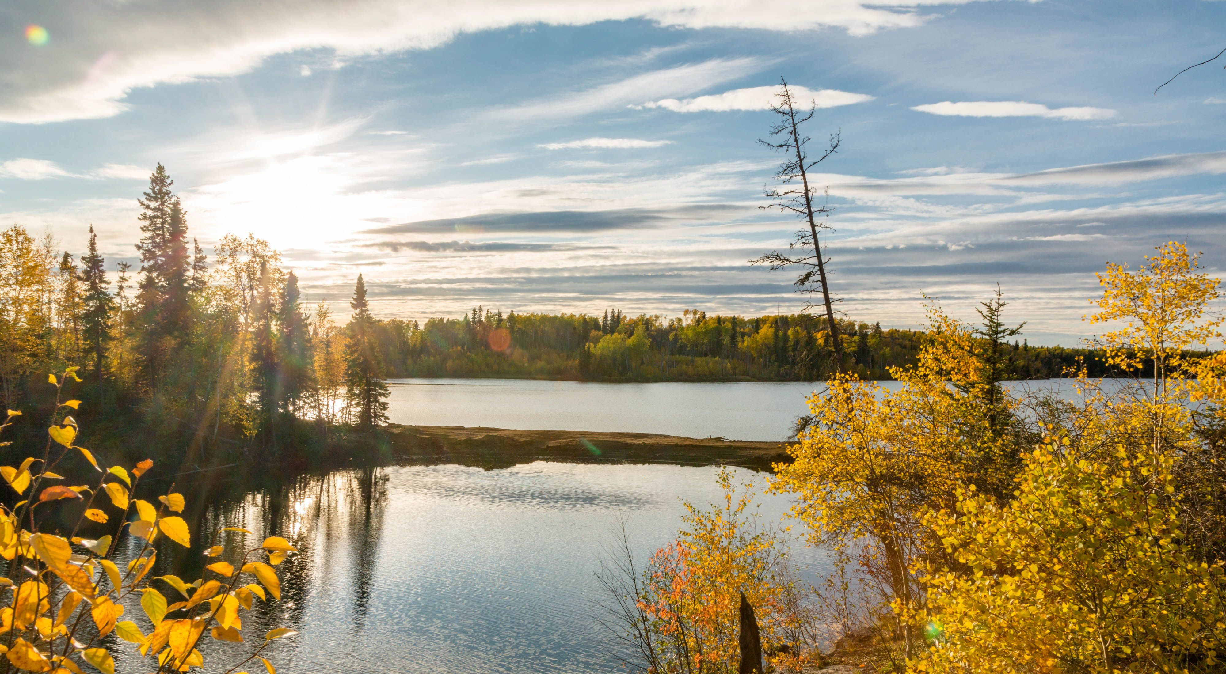 Spanning 1.3 billion acres, the boreal forest is the Earth's largest terrestrial carbon sink.