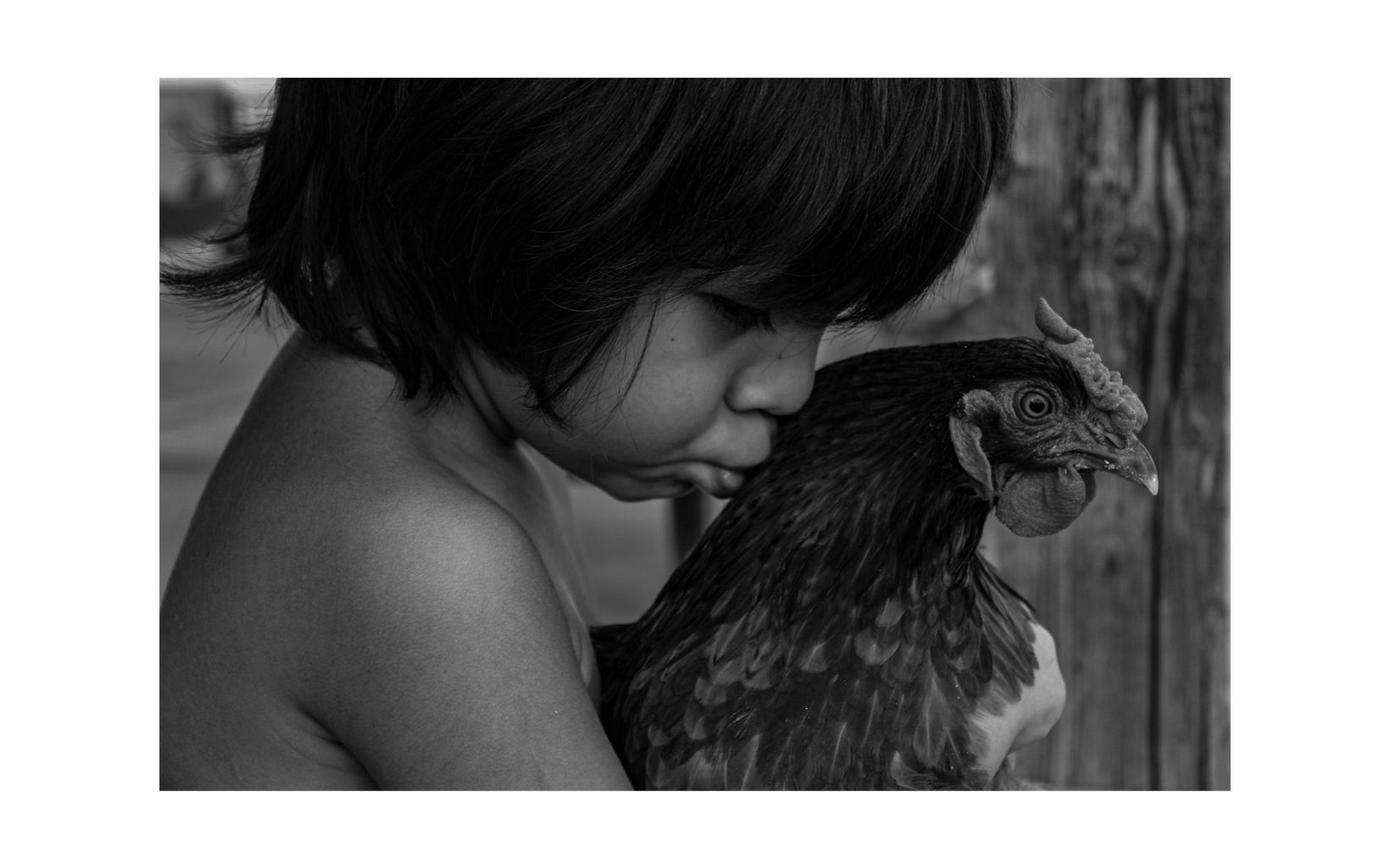 Black and white photo of a shirtless child with straight black hair with his lips pressed against the back of the neck of a chicken.