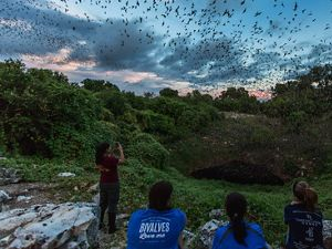 Thousands of bats emerging from a cave opening.