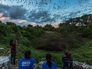 Millions of Mexican free-tailed bats emerge from Bracken Bat Cave in the Texas Hill Country.