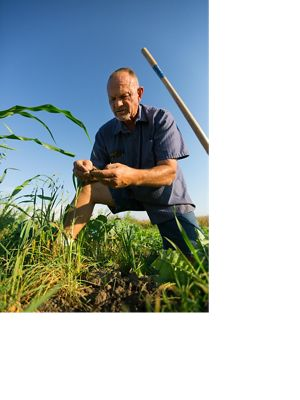 Brian Roemke inspects the soil on his Indiana farm where he uses cover crops and other practices for help conserve soil and water.
