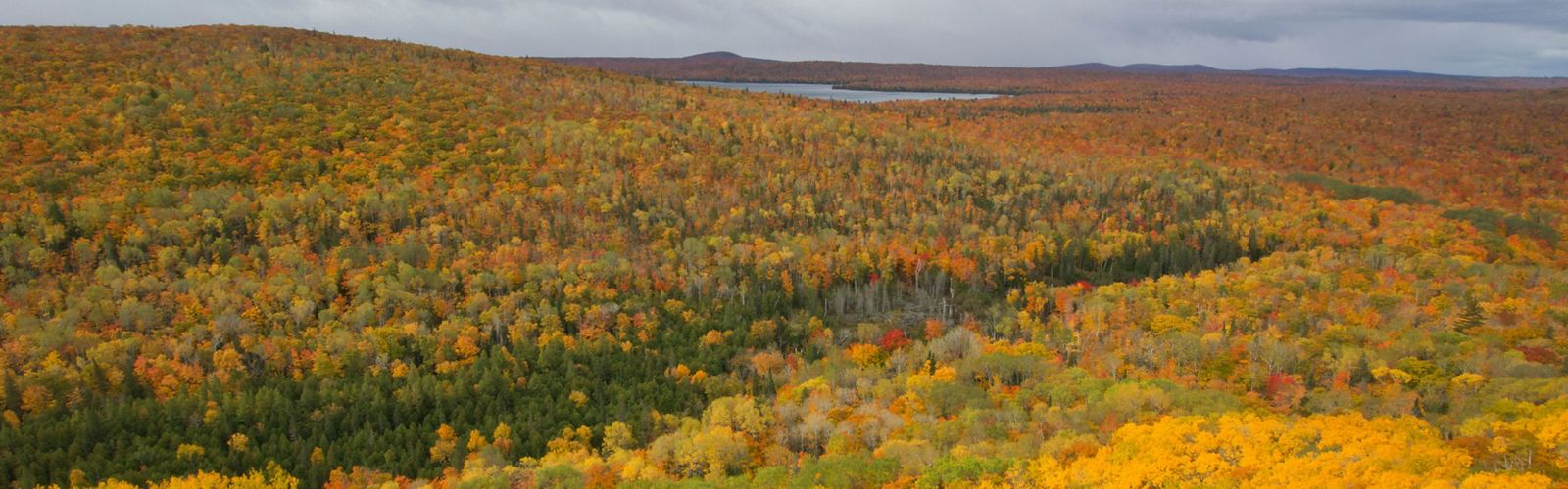 Aerial view of a large autumn forest