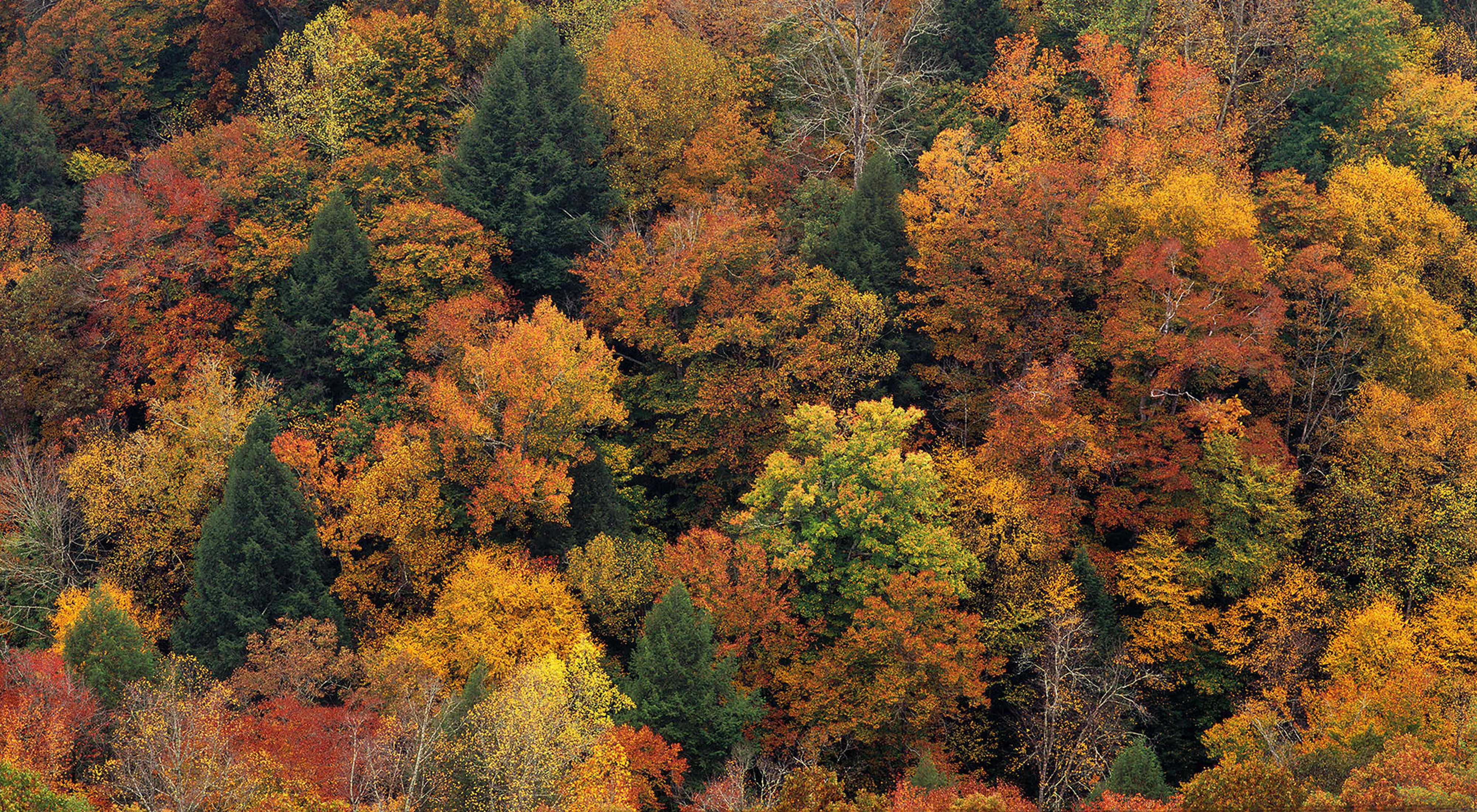 A forest in autumn with trees of various color.