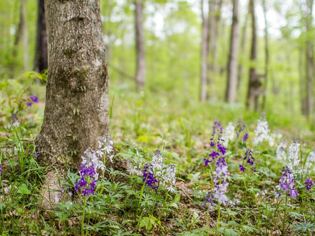 Purple wildflowers emerge from the forest floor.