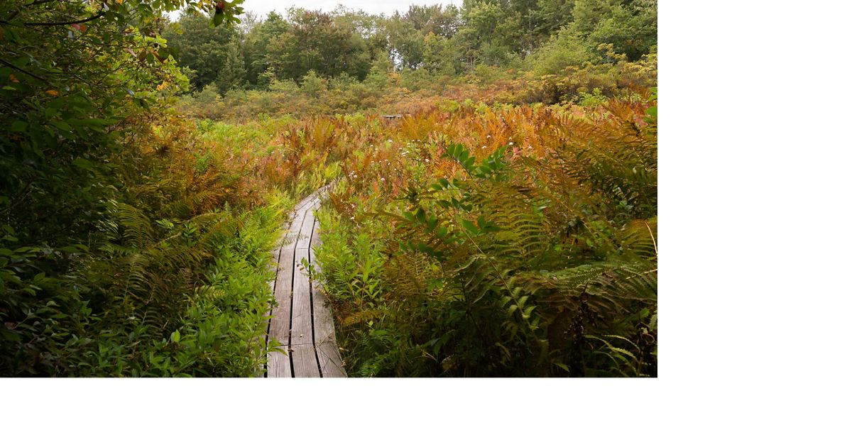 Lush foliage along the boardwalk turning to fall colors