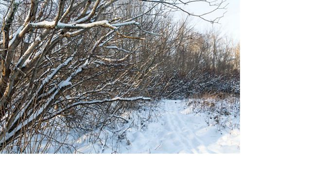 Winter scene of snow capped branches and a snow covered trail.