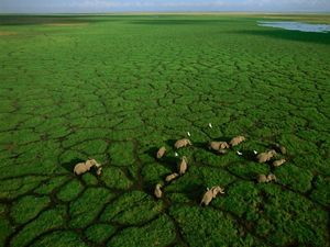 Elephants cross the dry bed of Kenya's Lake Amboseli.