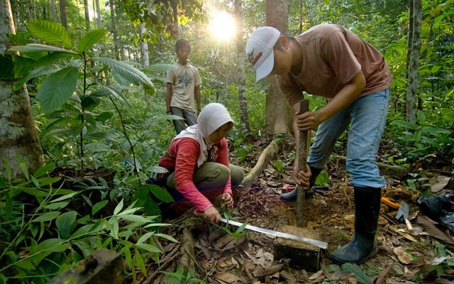 Taking a soil sample during carbon monitoring in the tropical forest near Berau.