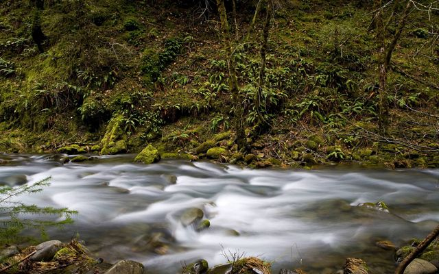 The rushing water of Elder Creek, with moss covered banks, as it flows into South Fork of Eel River in Angelo Reserve.