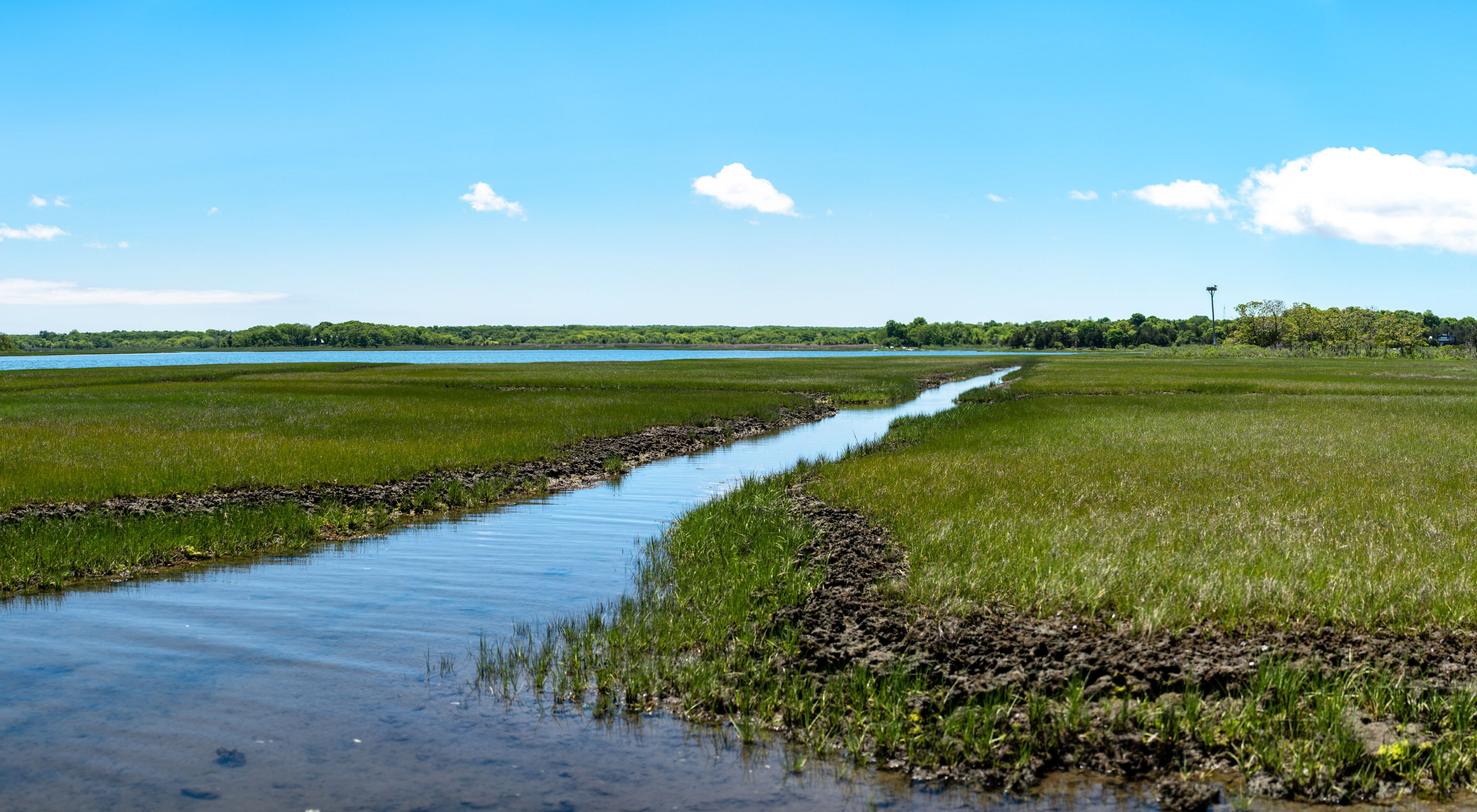 A narrow stream meanders through a bright green salt marsh under blue skies with scattered clouds.