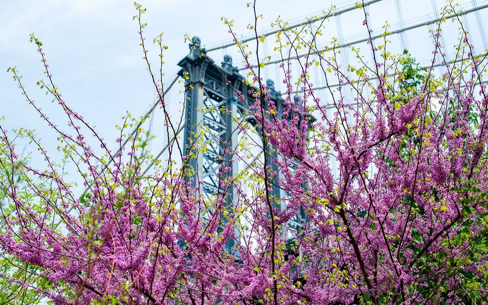 Gorgeous flowers bloom under the Brooklyn Bridge.