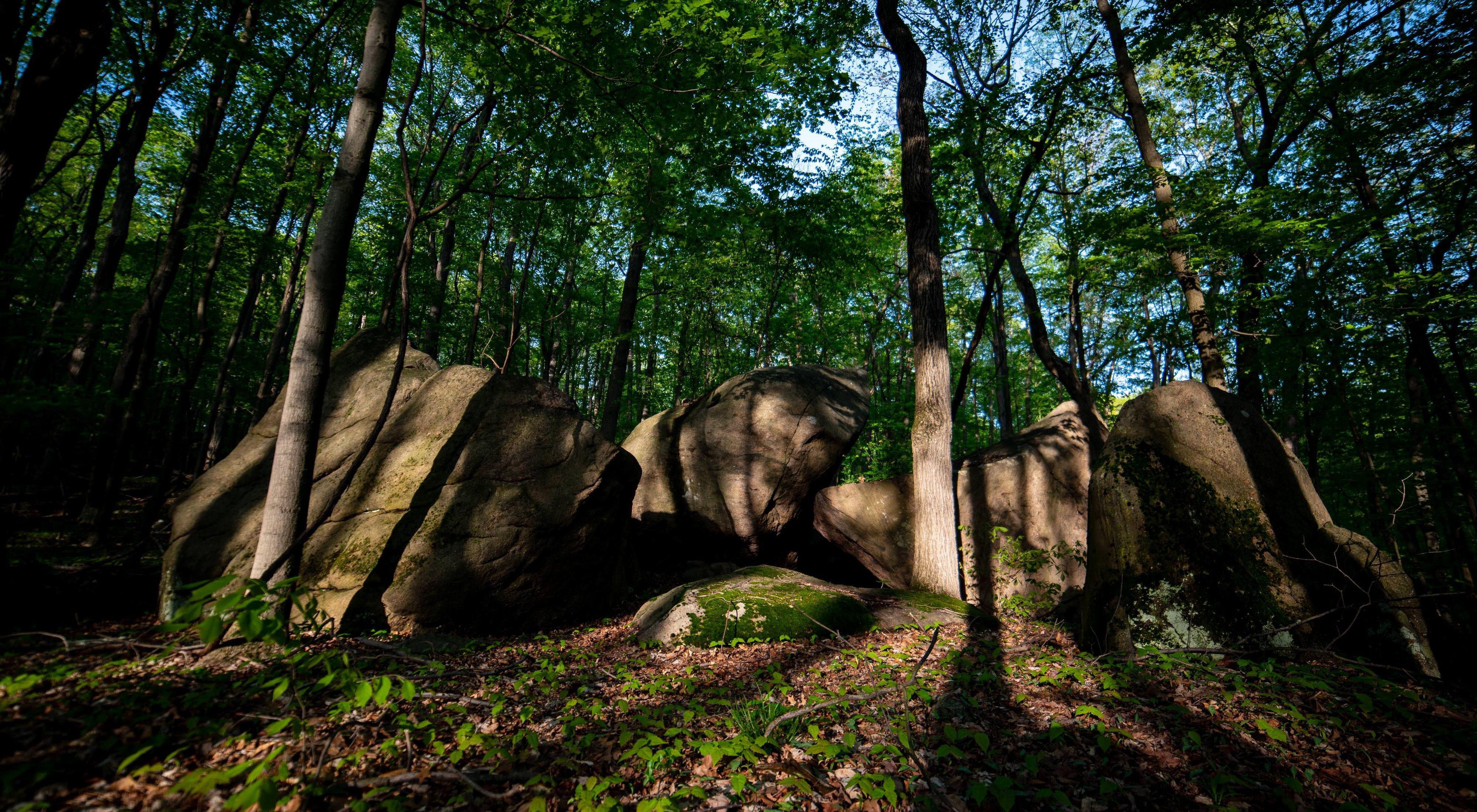 Shadows cast over boulders and a few trees.
