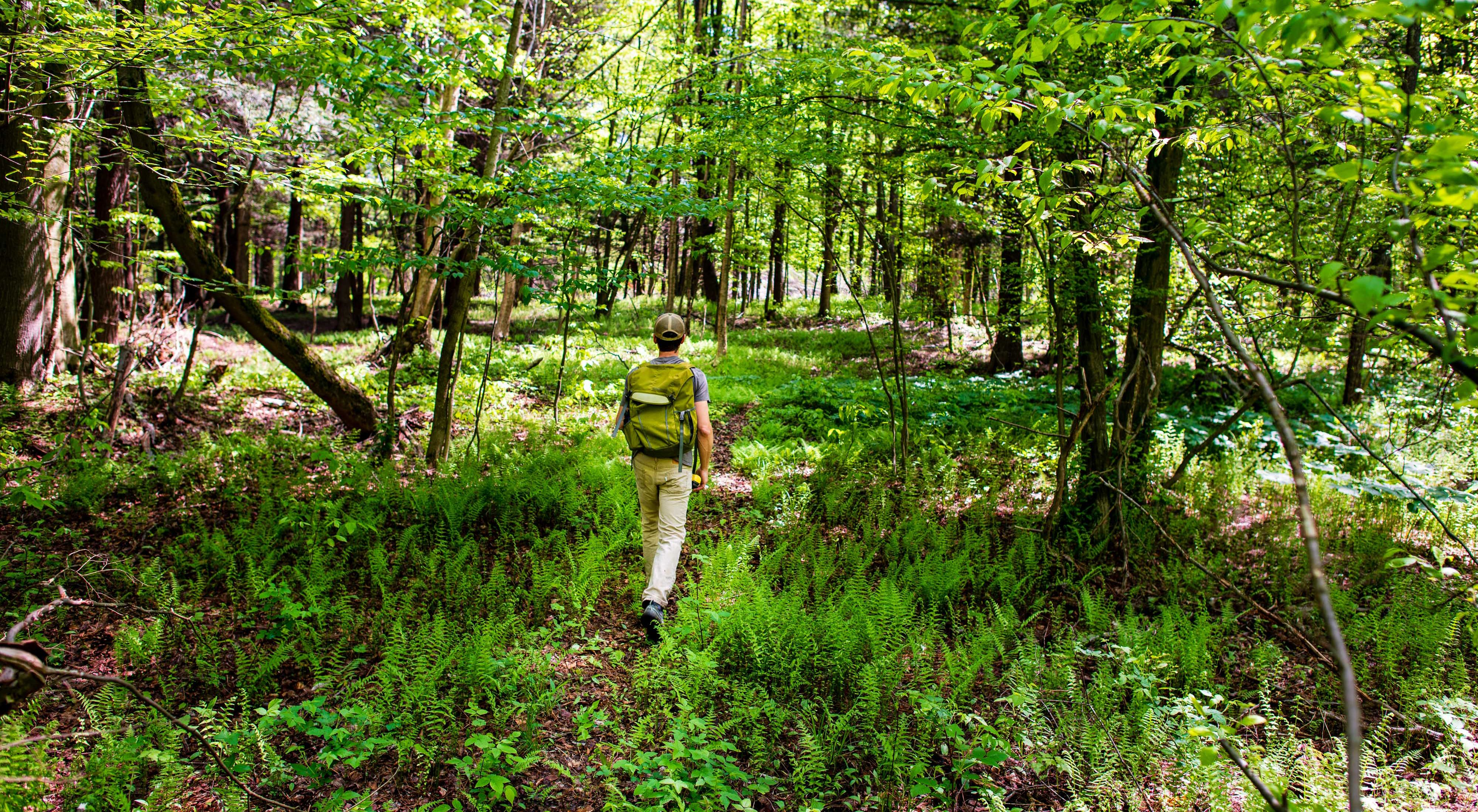 A man walking on a trail with ferns, trees and shrubs surrounding him.