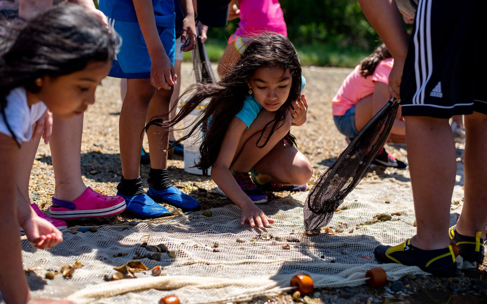 Kids kneel to sort through shells and minnows in a seine net on the beach.