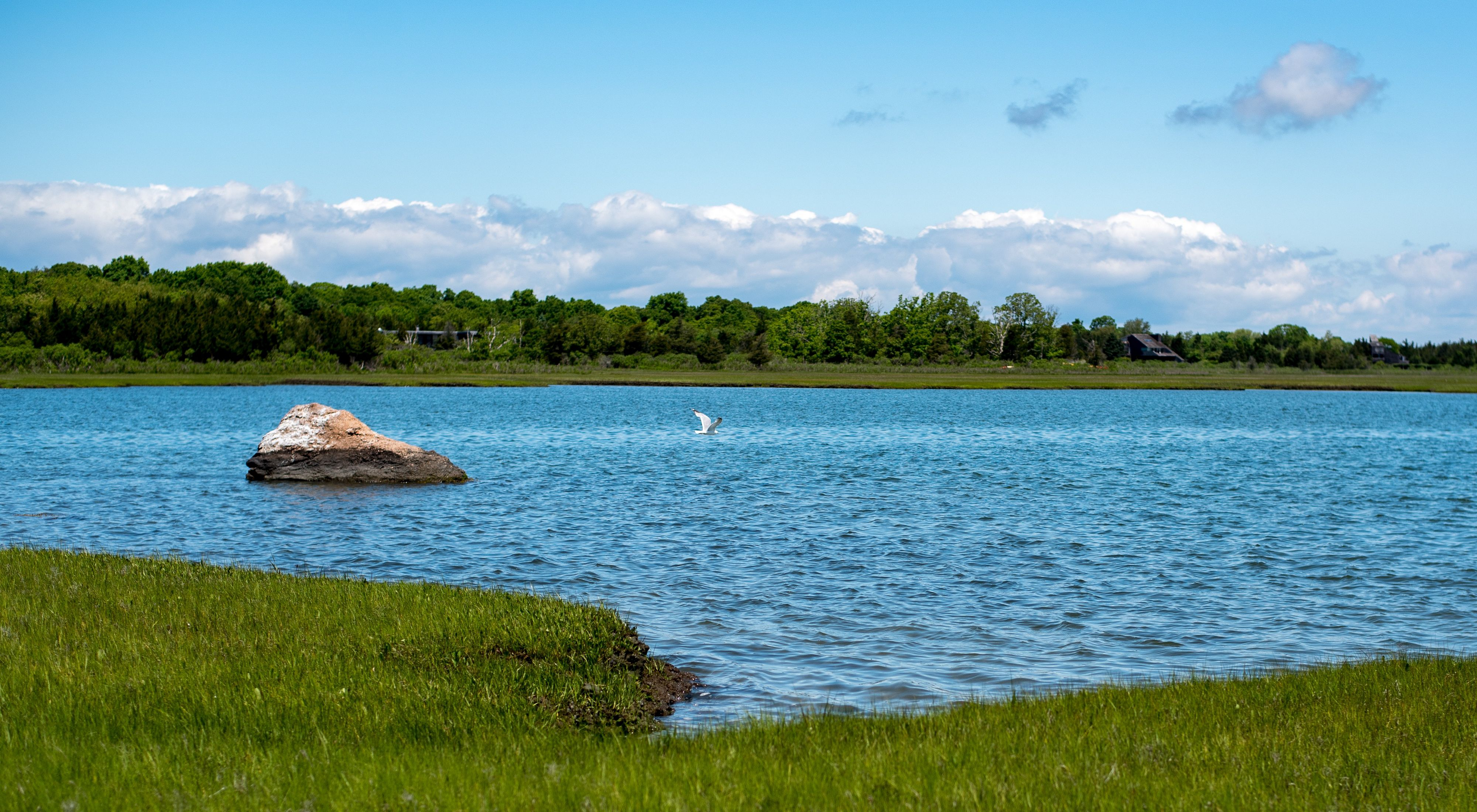 A white bird flies over blue waters surrounding by a green marsh.