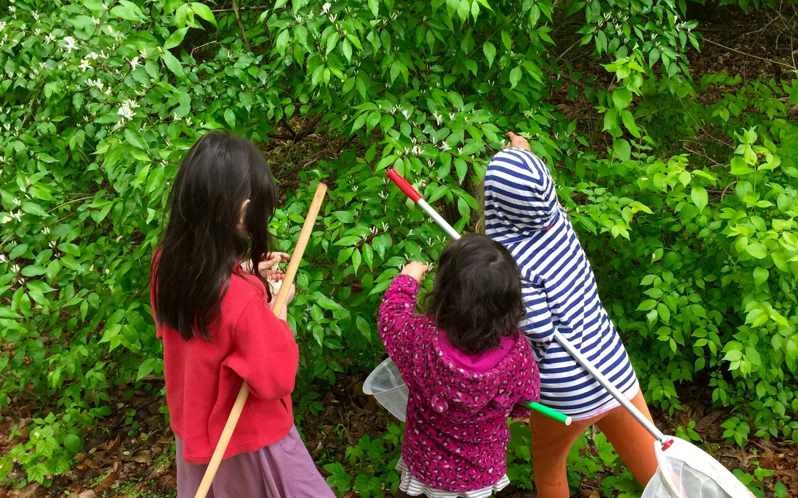 "Young naturalists on the hunt for critters  during the Maryland/DC chapter's ""Moths in the Morning"" guided hike."