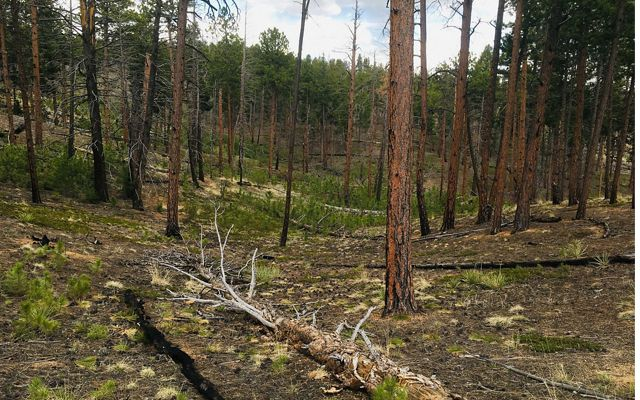 TNC is looking at the bigger picture to develop methods that efficiently reforest high-severity burn patches.