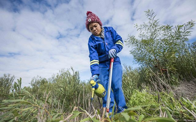 A team of women remove invasive plants in the Atlantis Aquifer on behalf of the Greater Cape Town Water Fund.