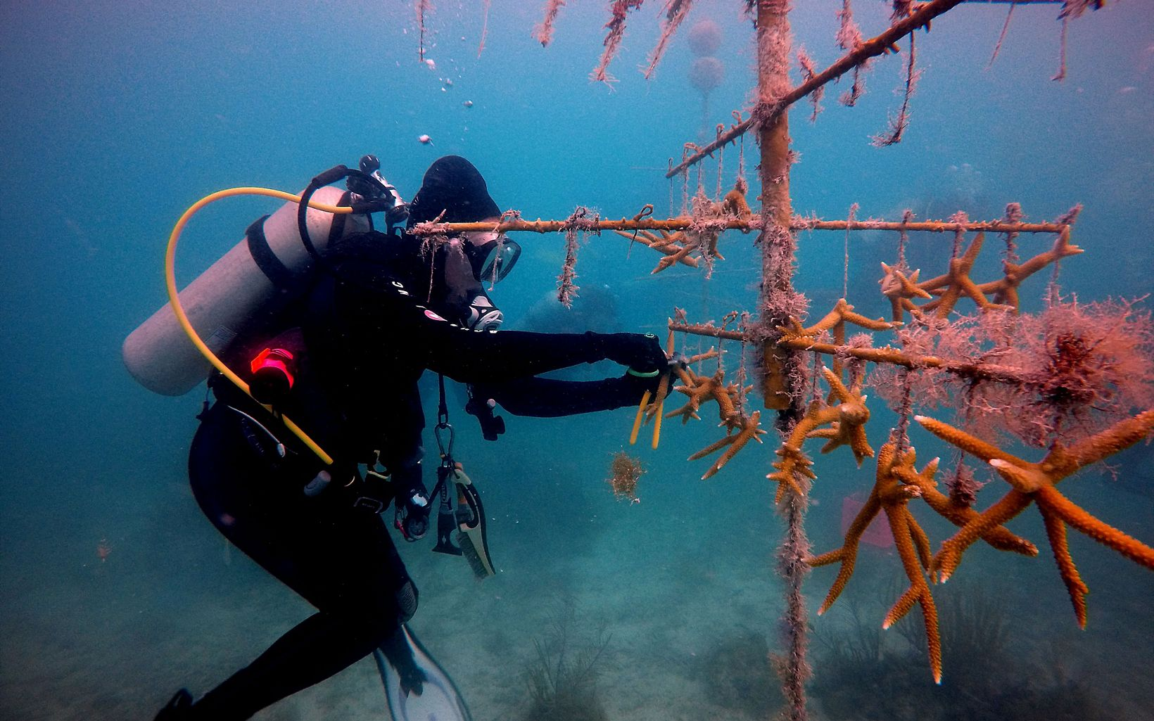 TNC Coral Nursery in the Dry Tortugas National Park, Florida