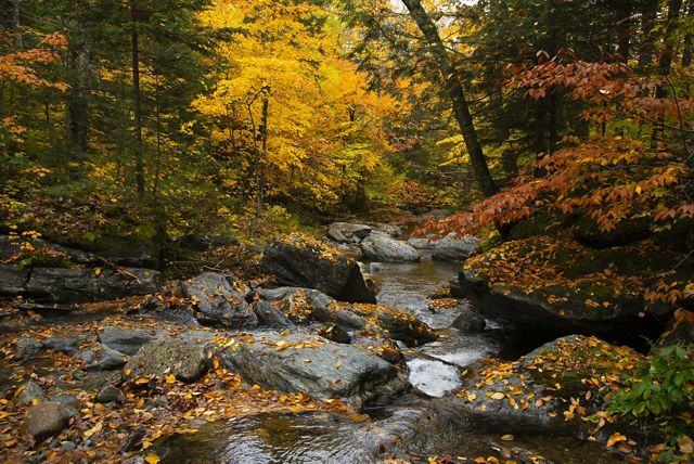 A small brook in a Vermont forest with colorful fall foliage.