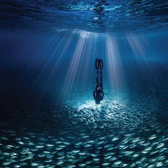 A free-diver explores Caribbean waters teeming with fish.