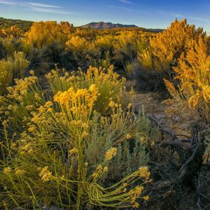 Sagebrush Ecosystems