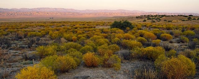 Landscape view of Carrizo Plain National Monument, with a wide, dry plain covered in shrubby plants and hills in the distance.