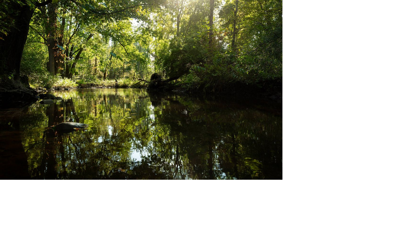 The Cass River in Michigan runs through farm country, providing sustenance and habitat to plants, animals, and people.