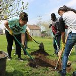 Three youths plant trees in Bridgeport.