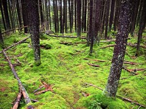 Green moss covers a forest floor.
