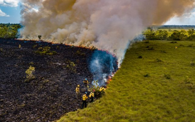 Aerial view of fire practitioners during a wildfire suppression training, Deep River Forest Reserve, Belize.