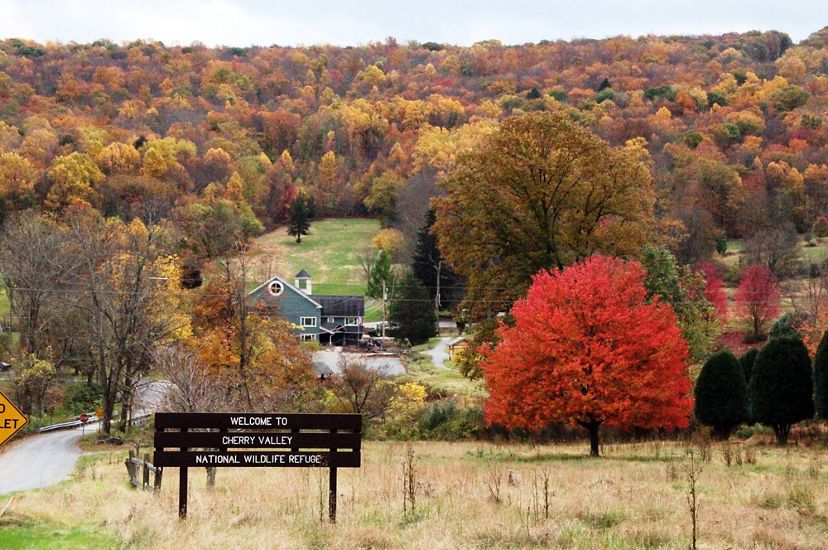 A large wooden sign welcomes visitors to Cherry Valley National Wildlife Refuge. A tree with bright red leaves stands in an open field to the right. A forest of fall colors dominates the background.
