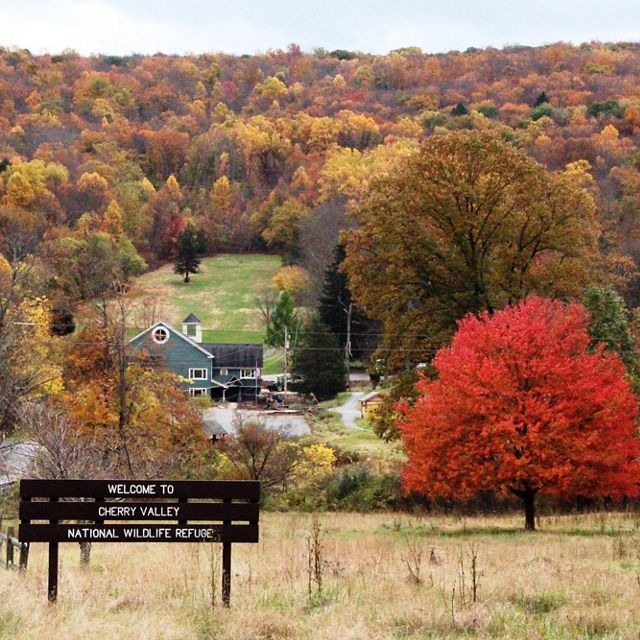 Entrance to Cherry Valley National Wildlife Refuge. A large road sign welcomes visitors. A tree with bright red leaves stands just beyond the sign in the middle of an open field.