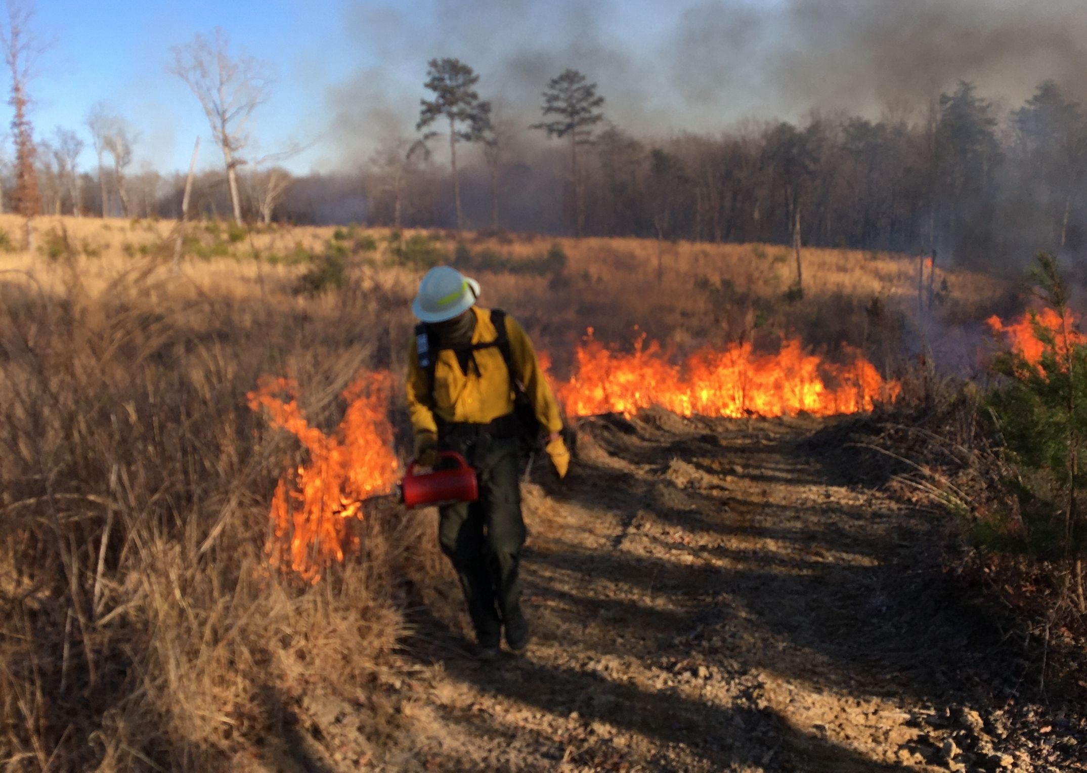 A staff member delivers fire to a portion of the preserve.