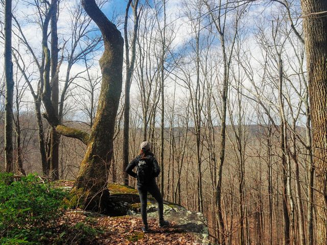 A hiker looks out on a valley through leafless trees.