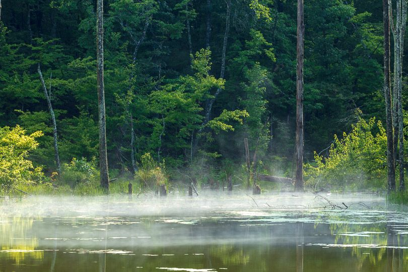 A fog hovers over forested wetlands.