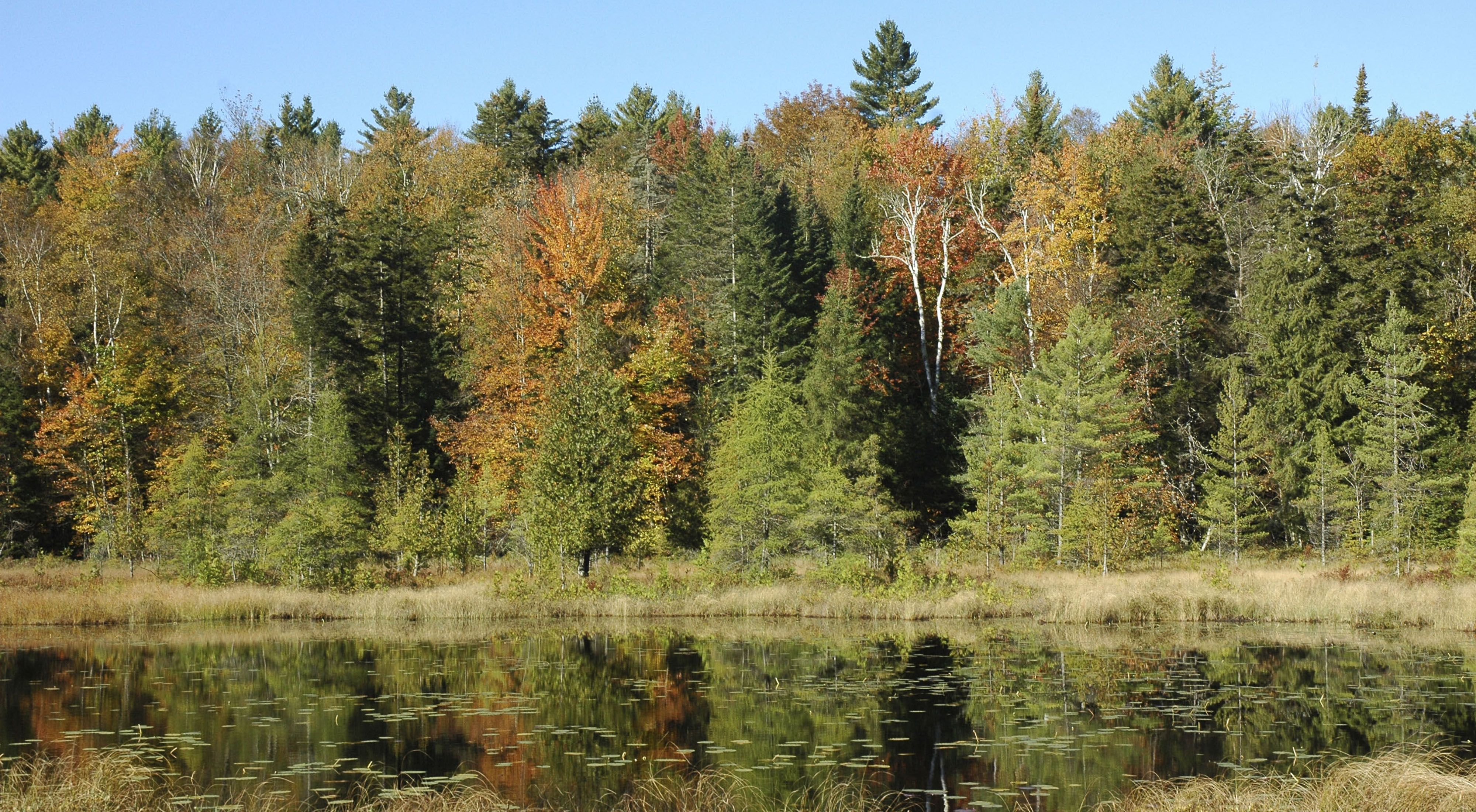 Chickering Bog is rich in biodiversity such as rare plants.
