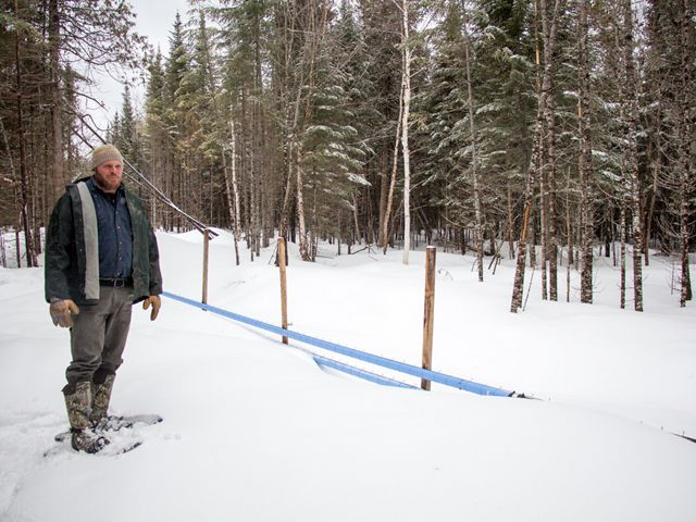 Chris Stone stands in snowshoes beside blue plastic pipes that carry sap from trees the sugarhouse.