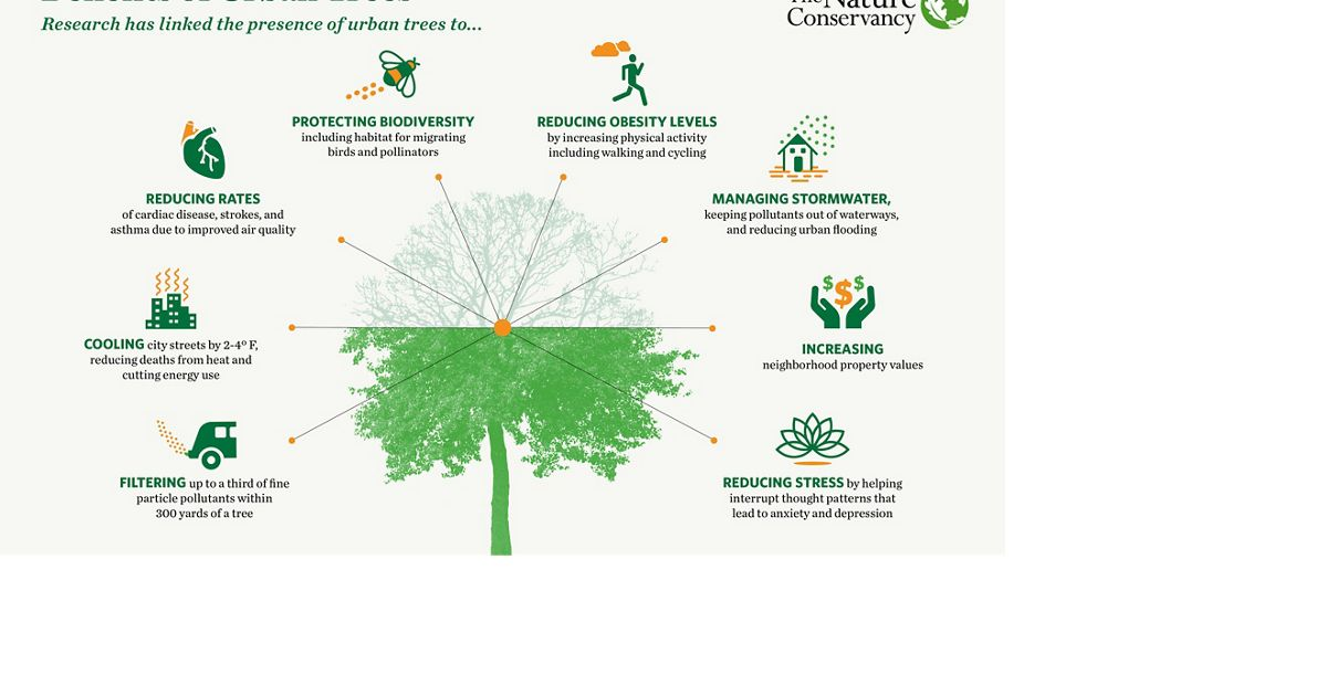 An infographic illustrates the benefits of city trees.