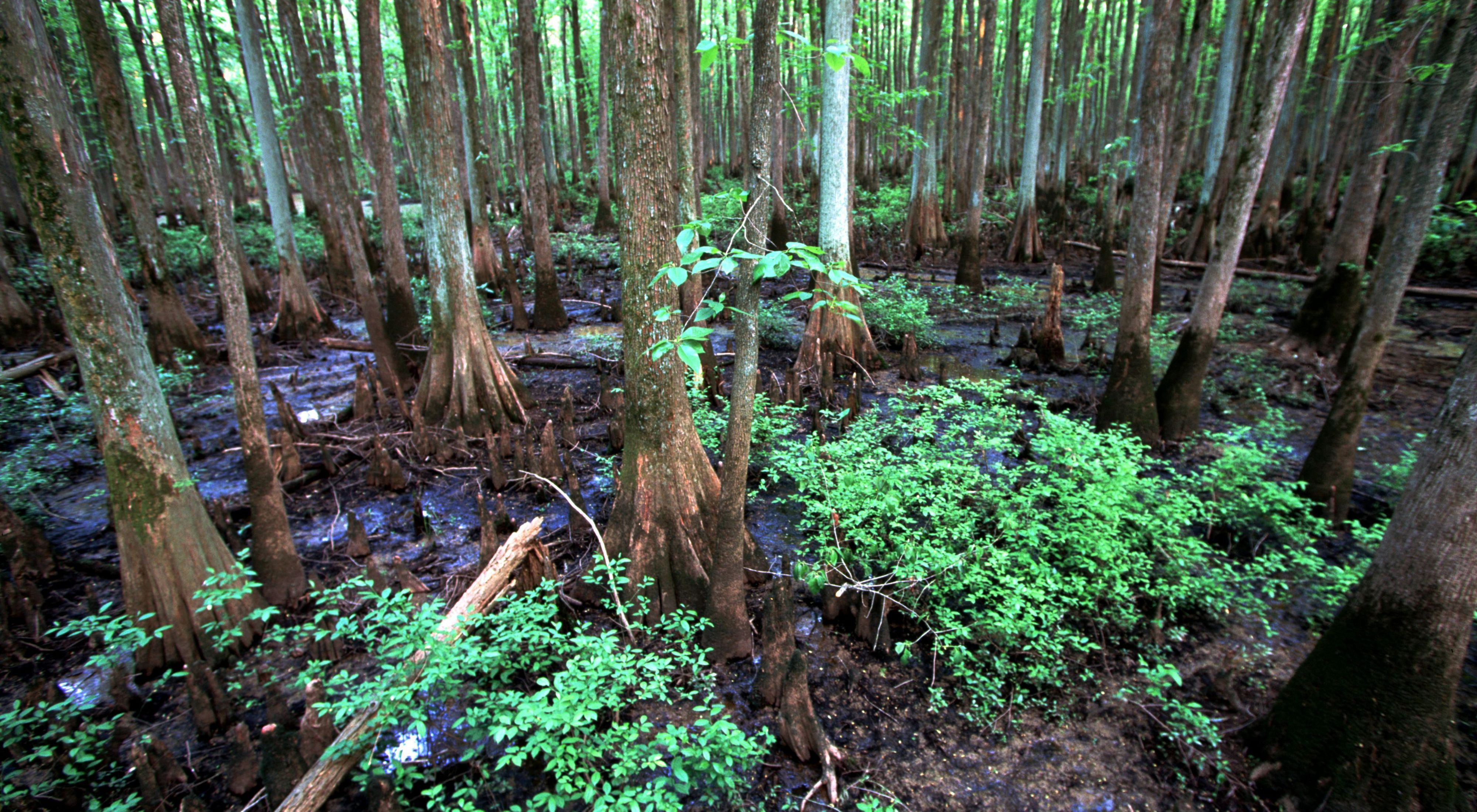 Swamp at William B. Clark Conservation Area