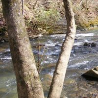 Clifty Creek Preserve, located beside the Emory River.
