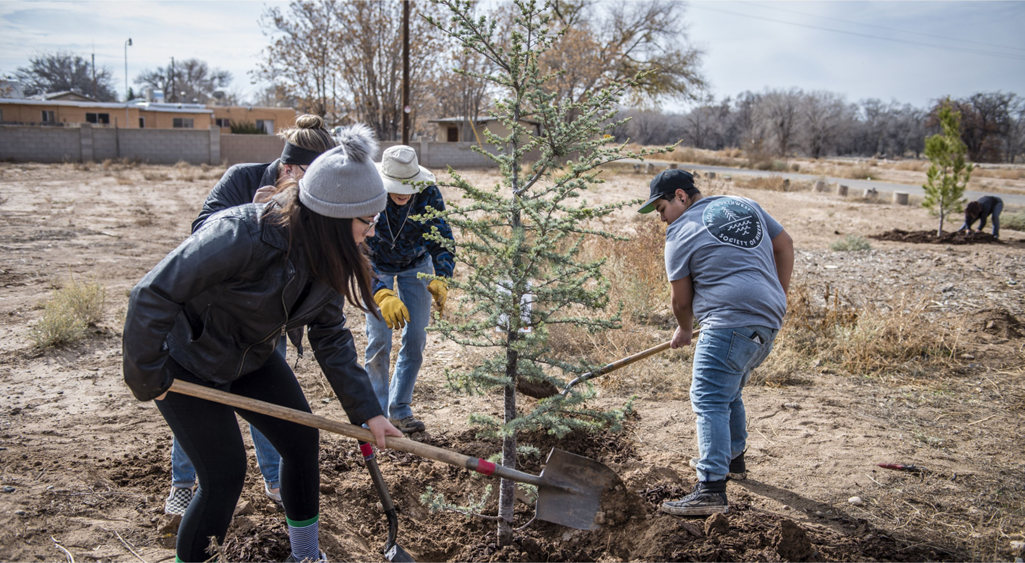 Four people with shovels plant an evergreen tree.