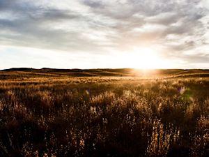 Sun rises in the horizon over a tallgrass prairie