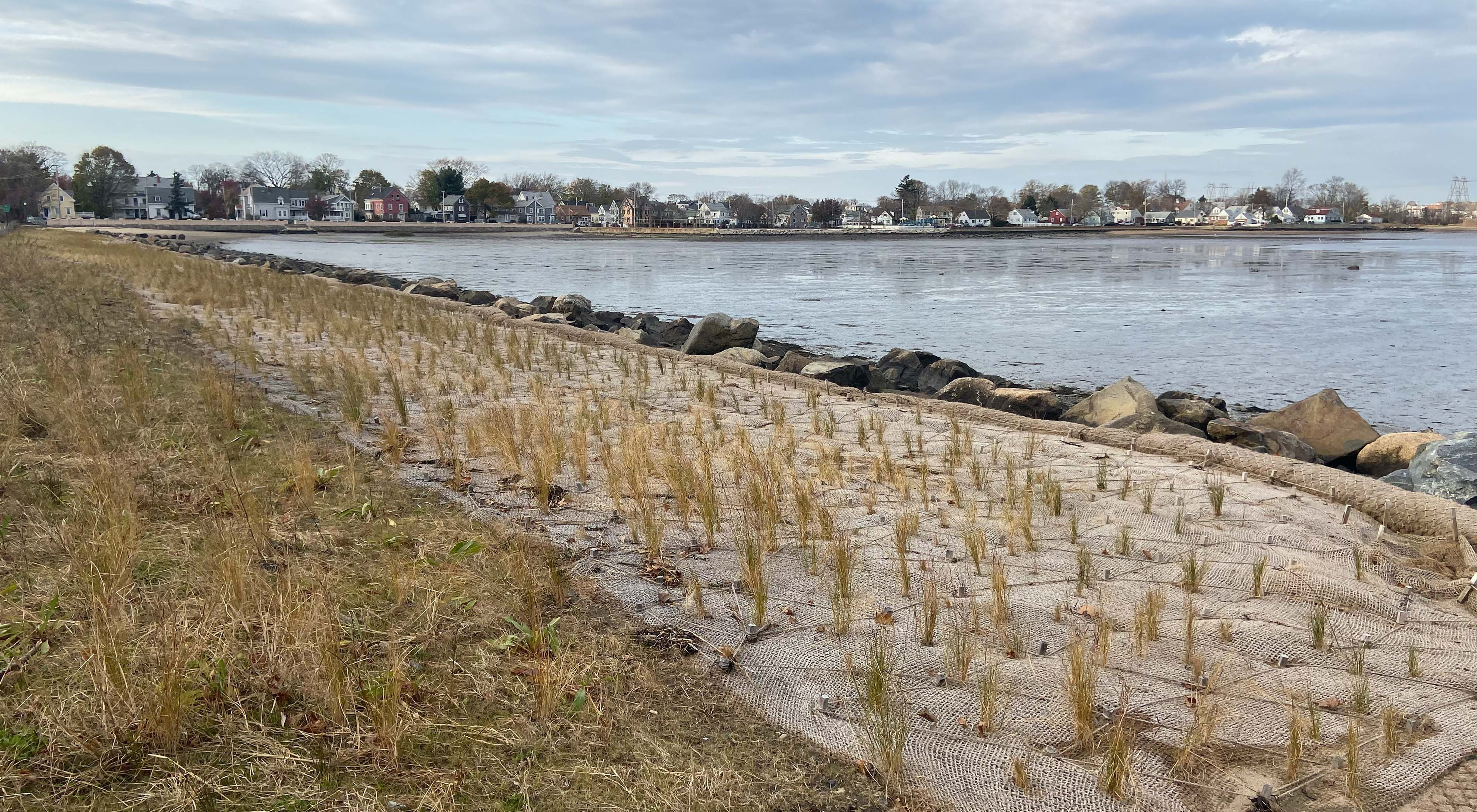 Shoreline along a bay in Salem, Massachusetts, with newly planted marsh grass in the foreground.