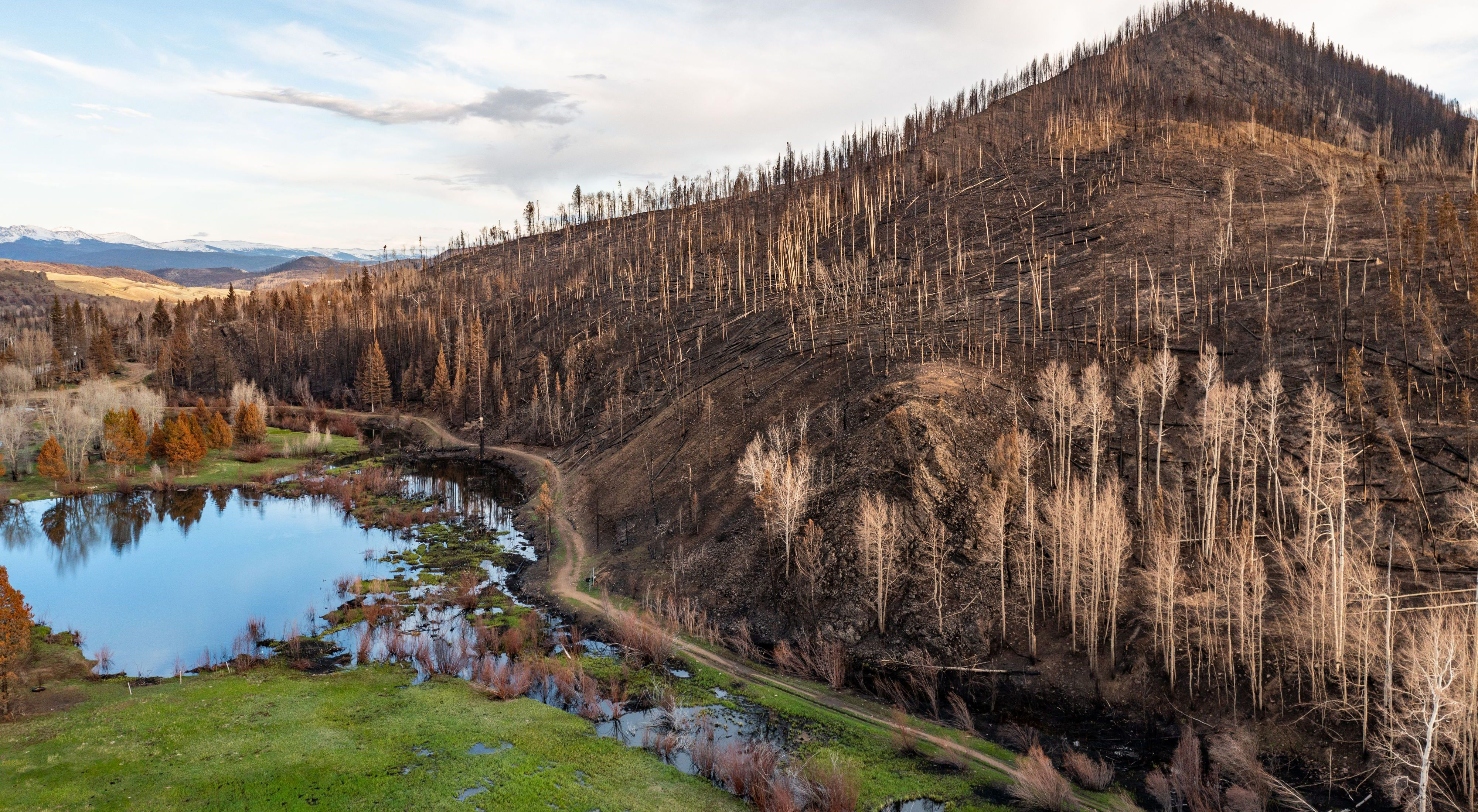 Bare, black and brown earth and dead, burned trees on a hillside sloping down to pools of water.