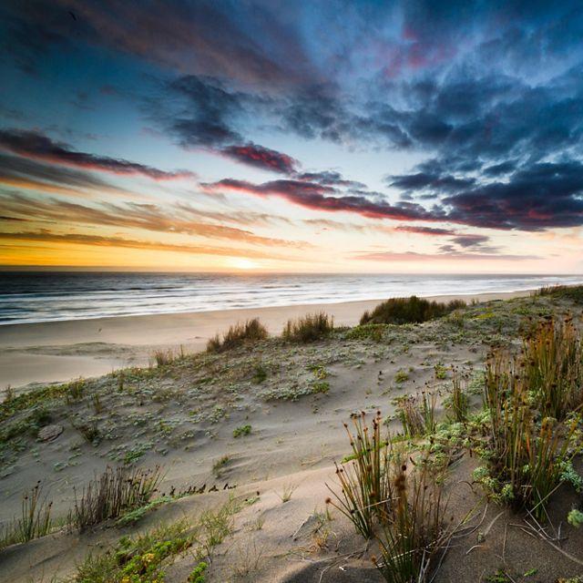 on Colun Beach in the Valdivian Coastal Reserve, Los Rios, Chile
