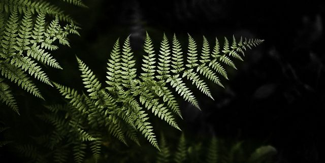 a green fern is illuminated against a black background